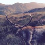 Hjort-Scotland
