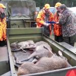 Jagt i skals + borrislejren 2011 019