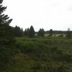 Jagt i skals + borrislejren 2011 027