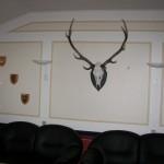 Jagt i skals + borrislejren 2011 041
