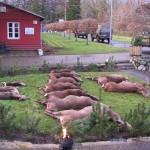 Jagt i skals + borrislejren 2011 042