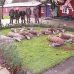Jagt i skals + borrislejren 2011 043