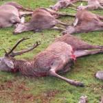 Jagt i skals + borrislejren 2011 045