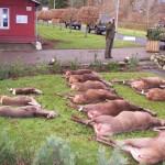 Jagt i skals + borrislejren 2011 048