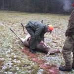 krondyrs jagt i noerlund 22 12 2011 001