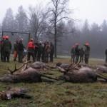 krondyrs jagt i noerlund 22 12 2011 010