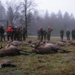 krondyrs jagt i noerlund 22 12 2011 011