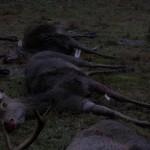 krondyrs jagt i noerlund 22 12 2011 017